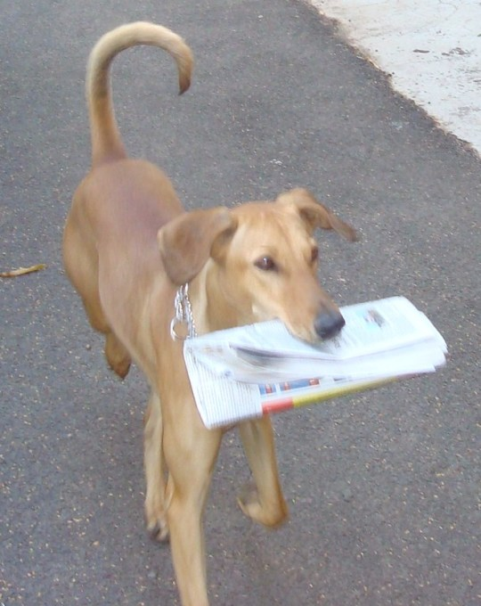 SHERRY FETCHING THE NEWSPAPER FOR ME